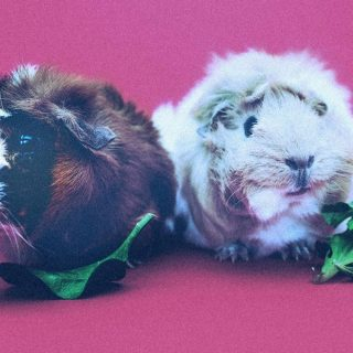 Be the Guinea Pig for New Policies at Work